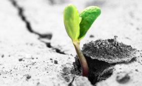 Help us grow Life